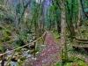 Sentiero-del-Grottone-Serra-SantAbbondio