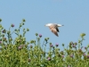 castiglione-pescaia-foto-tidpress-11