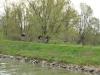 Venetien-Fluss-Sile-Paolo-Gianfelici (13)