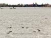 Venedig-Lagune-Paolo-Gianfelici (12)