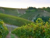Weinbergen-Italien-TiDPress (1)