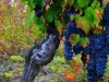 Weinbergen-Italien-TiDPress (2)
