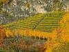 Weinbergen-Italien-TiDPress (3)