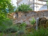 Rom-Botanischer- Garten-Elvira-Dippoliti(3)