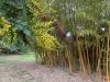 Rom-Botanischer- Garten-Elvira-Dippoliti(4)