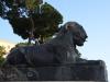Rom-Stein-Zoo-Paolo-Gianfelici (16)
