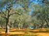 Sardinien-Landwirtschaft (2)