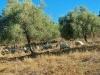 Sardinien-Landwirtschaft (6)