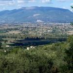 2-6-Montefalco