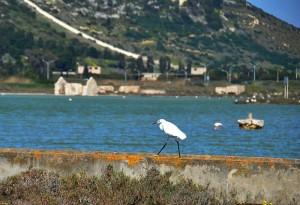 Cagliari-Parco-delle-saline-Foto-TidPress (2)