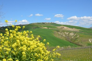 Provincia-Ascoli-Piceno-Foto-Paolo-Gianfelici (2)