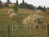 azienda-agricola-bandut-giorgio-colutta-manzano-4