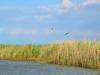 castiglione-pescaia-foto-tidpress-14