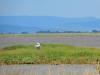 castiglione-pescaia-foto-tidpress-15