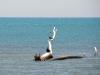 castiglione-pescaia-foto-tidpress-6
