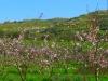 Blütezeit in Italien