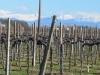 Friaul-Precenicco (3)