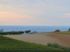 Weinbergen-Italien-TiDPress (10)