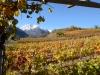 Weinbergen-Italien-TiDPress (4)