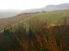 Weinbergen-Italien-TiDPress (6)