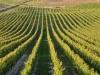 Weinbergen-Italien-TiDPress (7)