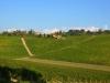 Weinbergen-Italien-TiDPress (8)