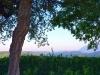 Weingut-Masciarelli-TiDPress (7)