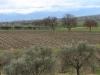 weinanbaugebiet-montefalco