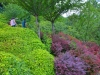 Rom-Botanischer- Garten-Elvira-Dippoliti(2)