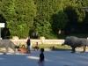 Rom-Stein-Zoo-Paolo-Gianfelici (30)