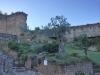 Olivenbaum aus dem 17. Jahrhundert, Festung Castrocaro