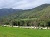 Sardinien-Landwirtschaft (3)