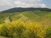 Weinberge-Italien-TiDPress (11)