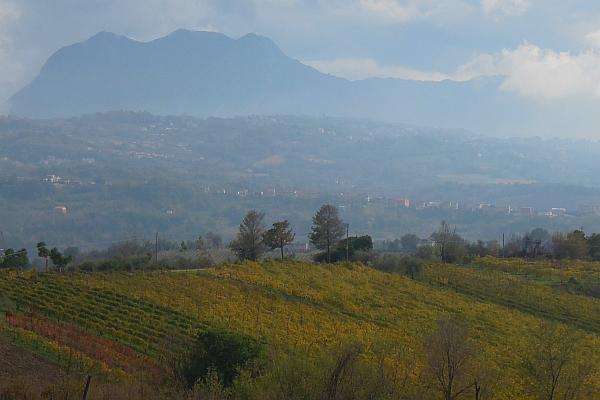 Der wahre Wein im wahren Italien