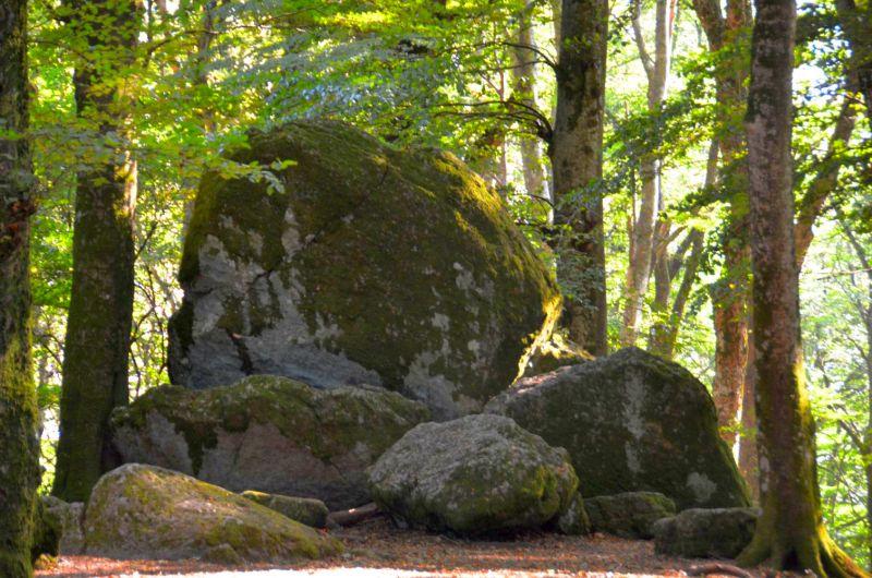 Latium, Der Buchenwald auf dem Monte Cimino
