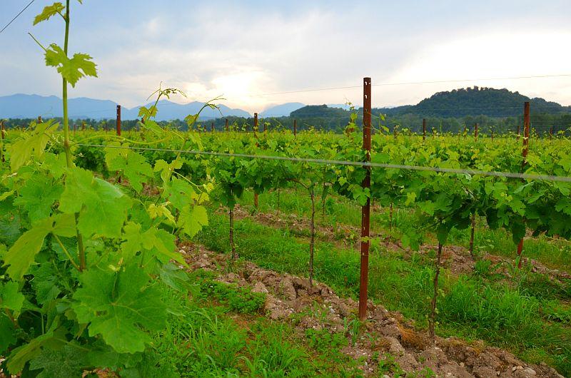 Zwischen dem Piave und dem Montello-Berg: Weinberge und die Biodiversität der Villa Sandi