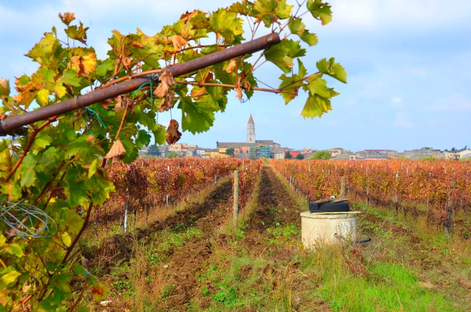 "Emotionaler Weintourismus verspricht die ""Cantina di Venosa"" (Basilikata)"