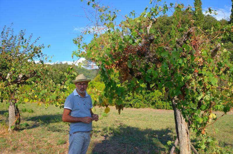 Toskana, Naturwein aus Cortona