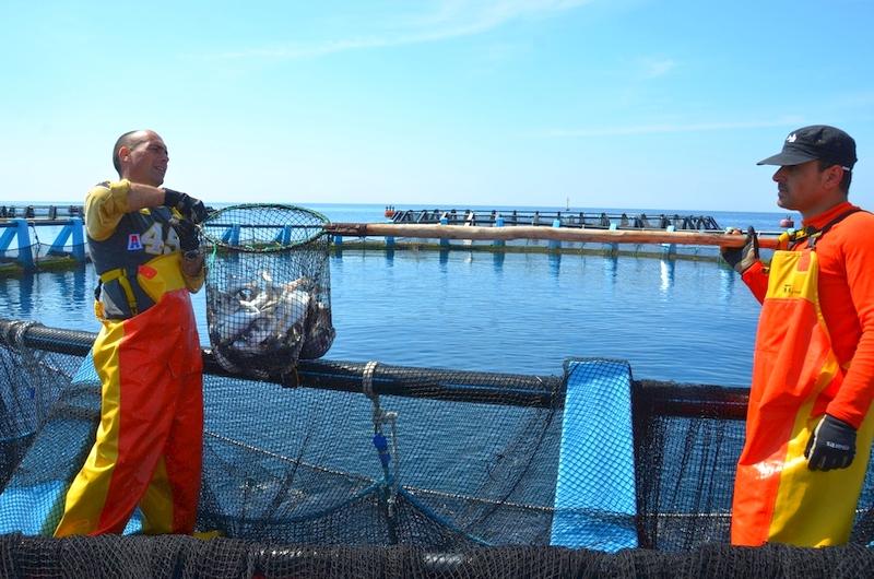 Die Fischzucht Inmare vor Gallipoli