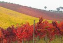 Aglianico-Weine aus Kampanien