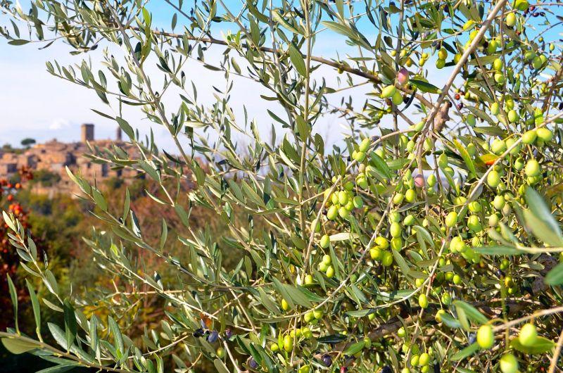Flos Olei 2021: der Führer zum kaltgepressten Olivenöl Italiens (und der Welt)