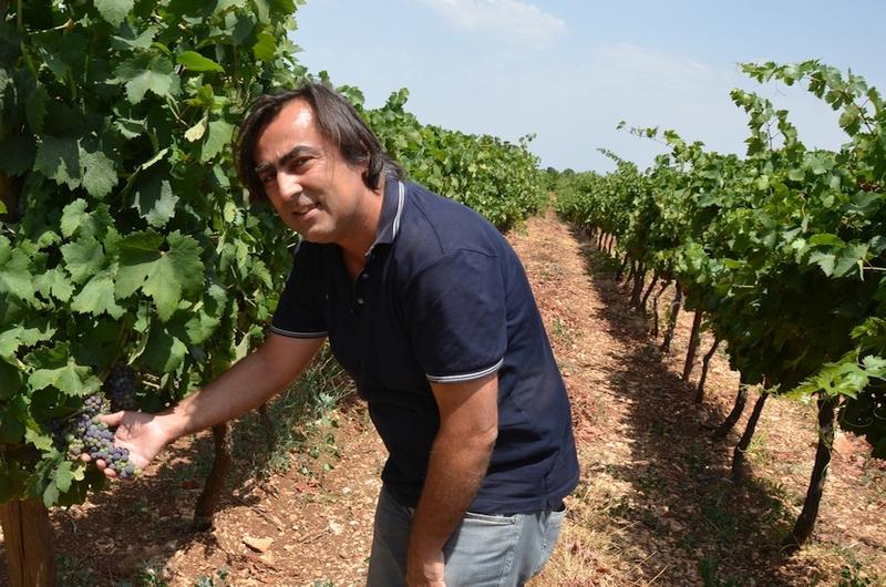 Apulien: die biologischen Weine der Cantine Polvanera