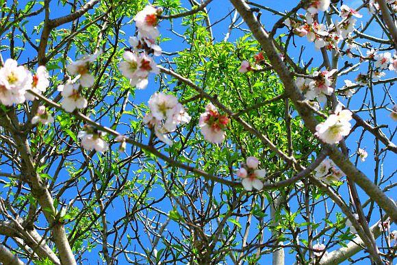 Wandern durch Italiens Blütezeit