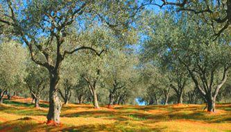 Sardiniens-Landwirtschaft (2)