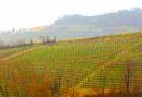 Weinberge-Italien-TiDPress (15)M