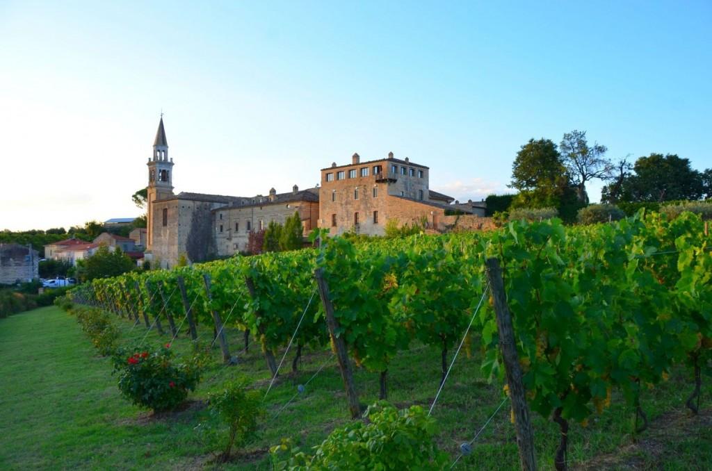 Masciarelli-Weine in den Abruzzen